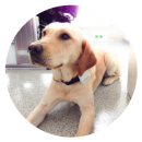 Tractive GPS Tracker Hond