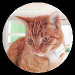 Tractive GPS Tracker Kat